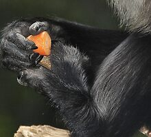 The Primate's Carrot by Tom Newman