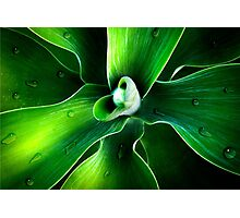 beauty of nature Photographic Print