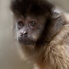 Black-Capped Capuchin  by Natalie Manuel