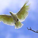 Sulphur Crested Cockatoo by Bill  Robinson