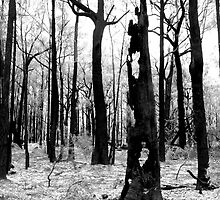 Burnt Tree - Bunyip State Forest by Clinton Plowman