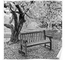 Blossom bench Poster