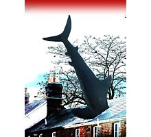 """Shark Attack"" Photographic Print"