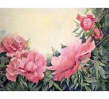 Tree peonies by Myhandyourheart