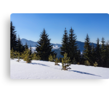 Little Pine Forest - Impressions of Mountains Canvas Print