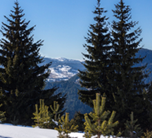 Little Pine Forest - Impressions of Mountains Sticker