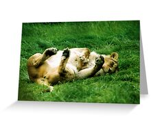 Flirty Lioness... Greeting Card