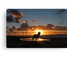 My Golden Retriever Ditte at the beach at sunset (Denmark, Kattegat, Odsherred) Canvas Print