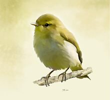 Wood Warbler by Bamalam Art and Photography