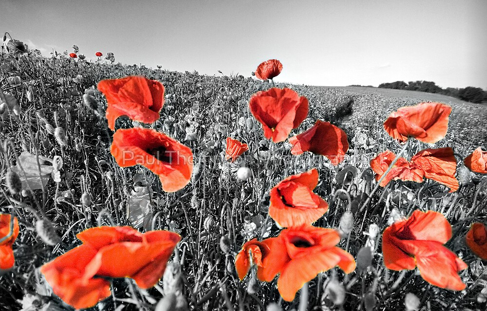 Poppies HDR by Paul Thompson Photography