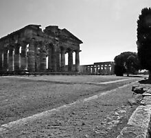 Paestum: trees and temples by Giuseppe Cocco