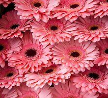 Pink Peach Gerbera. Amsterdam Flower Market by JennyRainbow