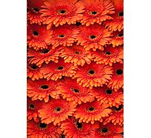Orange Gerbera 1. Amsterdam Flower Market Photographic Print