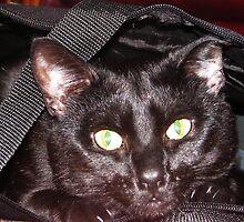 cat in the bag by Gazza