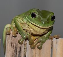 Frog on the fence - larger by LeanneA