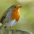 Robin by Robert Kendall