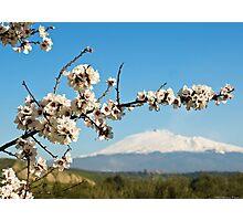 mandorlo in fiore etneo Photographic Print