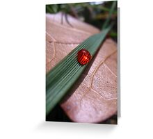 Drop Of Red Greeting Card