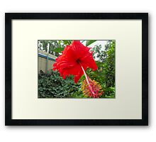 Solo Red Framed Print