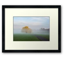 Soft Willow Morning Framed Print
