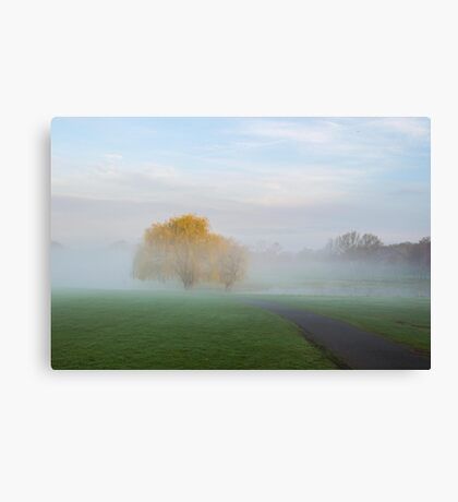 Soft Willow Morning Canvas Print
