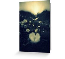 Slovakia mountain flowers Greeting Card