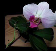Orchid realistic flower illustration by DavidMurk