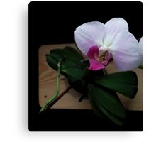Orchid realistic flower illustration Canvas Print