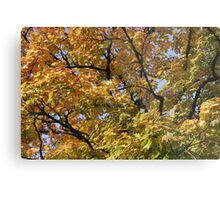 Eugene in the Fall Metal Print