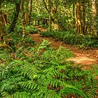 Mt Irvine Fern Walk by Michael Matthews