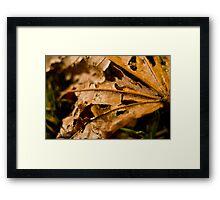 Ragged Leaf Framed Print