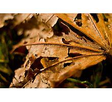 Ragged Leaf Photographic Print