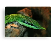 Vietnamese Leafnosed Snake Canvas Print