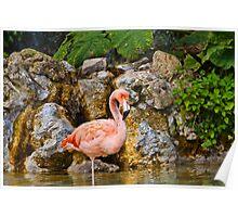 Flamingo Dudley Zoo England Poster