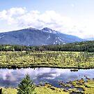 Alpine Marsh by Leslie van de Ligt