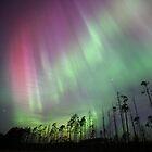 Northern Lights in the bog by Remo Savisaar