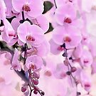 Pink Orchid dream by artsandsoul