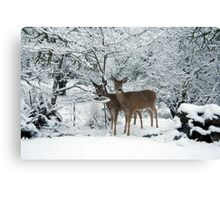 White Tails white Christmas Canvas Print