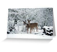 White Tails white Christmas Greeting Card