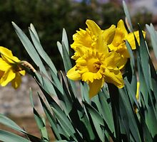 Flowers in Bloom by paulboggs