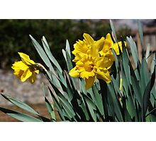 Flowers in Bloom Photographic Print