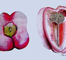 Pepper Study by Orla Cahill
