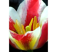 Time For Tulips Photographic Print