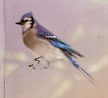 Blue Jay - A Dream of Spring by Megan Glosser