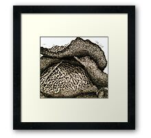 Cabbage Framed Print
