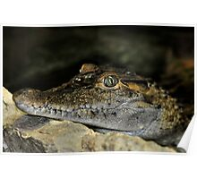 Philippine Crocodile Poster