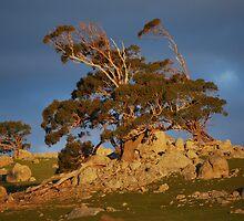 Tree of Light by GuyR