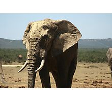 Elephant, Tembo Photographic Print