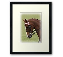 Nice Horse Portrait Framed Print