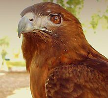 Red Tail Hawk by patti haskins